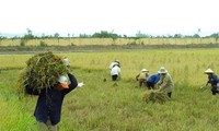 Affirming the role of agriculture in Vietnam's economy