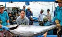越南农业与农村发展部与富安省政府举行金枪鱼价值链论坛