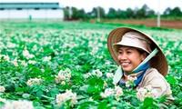 让农民做主——九龙江平原进行新农村建设的好经验
