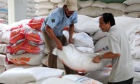 越南中标向菲律宾出口20万吨大米合同