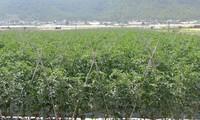 丹阳县天主教教民努力打造高科技农业