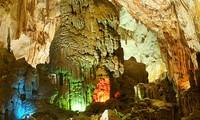 """越南广平省风芽-葛庞国家森林公园被授予""""2015年最佳有形遗产""""称号"""