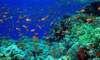 六十个国家承诺保护海洋环境