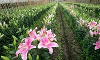多伦乡发展高技术农业建设新农村