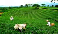 太原省举行第三次越南太原茶叶节