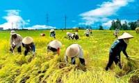 为越南加入《跨太平洋伙伴关系协定》后实现九龙江平原地区稳步发展做好准备