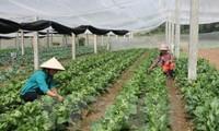 越南南定省和日本宫崎县合作发展农业
