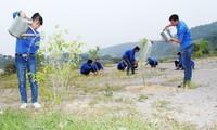 越南各地举行丙申新春植树节启动仪式