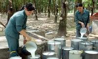 越南橡胶市场复苏