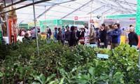 九龙江平原地区农业国际展即将举行