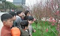 谅山省首次举行桃花节