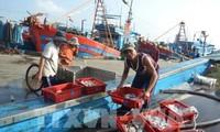 越南努力实施欧委会关于海产捕捞的建议