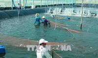 """越南积极处理欧洲理事会对越南水海产开采发出的""""黄牌""""警告"""