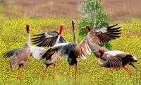 5.22国际生物多样性日:保护生物多样性论坛举行