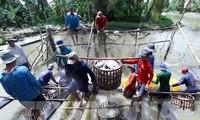 越南寻找措施向日本出口农水海产品