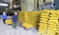 越南面向大米可持续出口目标