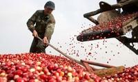 推动越南农产品进入高标准市场