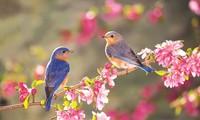 学唱歌曲《聆听春天的到来》(第一期)