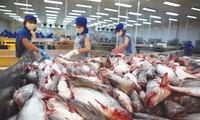2019年越南力争查鱼出口24亿美元