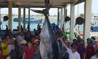 控制和防止非法、不报告和不管制捕捞国家指导委员会成立