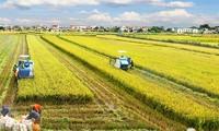 越南实施2030年可持续发展目标路线图