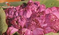 造访越南 观赏夏日莲花的美