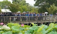 阮春福会见日越友好议员小组主席并参加日越莲花节