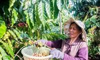 中国媒体:EVFTA给越南带来巨大机会