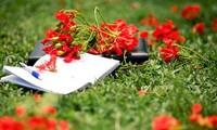 校园生活的象征——凤凰花