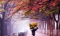 """Proyek """"Hanoi indah dan belum indah"""" turut membangun satu kota Hanoi yang berbudaya dan elegan"""