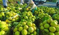 Bekannte Früchte in Obstgärten im Südwesten