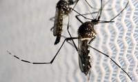 Vietnam erhöht Warnstufe bei Vorbeugung des Zika-Virus