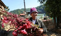 Das Blumen-Fest der Volksgruppe Cong in der Provinz Dien Bien