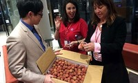 Vietnamesische Litschi nach Australien exportiert