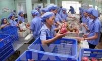Gewährleistung der Stellung vietnamesischer Landwirtschaftsprodukte auf Südkorea-Markt