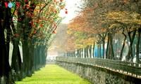 Farben des Herbstes in Hanoi