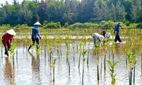 Verwendung internationaler Erfahrungen zur Anpassung an Klimawandeln in Vietnam