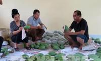 Vietnam exportiert erstmals grüne Mangos Son La nach Großbritannien