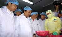 阮春福考察金欧省明富水产集团的出口虾加工模式