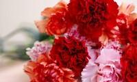 母亲节——弘扬维护家庭幸福之火的母亲的日子