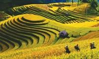 Mu Cang Chai und die Reisterassen