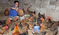 FAO verleiht Vietnam Preis für Armutsminderung