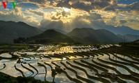Reisterrassen vor der Zeit zum Anpflanzen