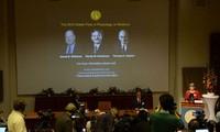 Medizin-Nobelpreis geht an deutsche und US-Forscher
