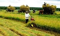 Lösung für vietnamesische Bauern nach dem Inkrafttreten des TPP-Abkommens