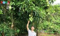 Verbesserung der Werte der Obst-Spezialitäten Vietnams