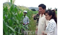 APEC bevorzugt Lebensmittelsicherheit und Landwirtschaft bei Klimawandel