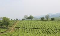 Erlebnistouren in Moc Chau