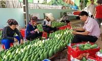 Starker Anstieg beim Export von Textilien und Gemüse