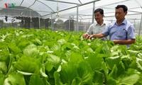 Start up mit Gemüseanbau mit Hochtechnologie in Quang Nam